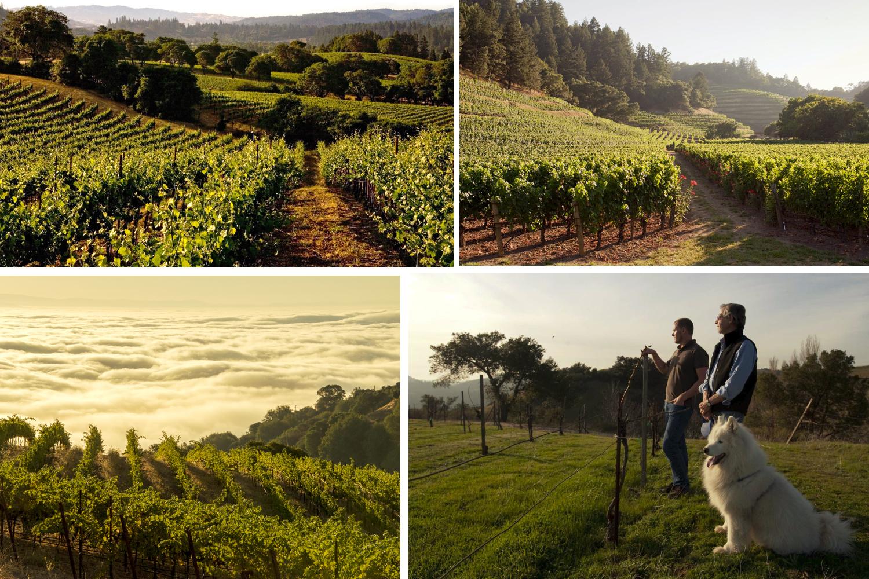 ridge-vineyards